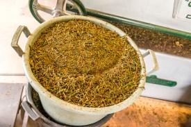 Detail Tee im Eimer Teefabrik Azoren Sao Miguel