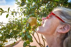 Frau Granatapfel Silves