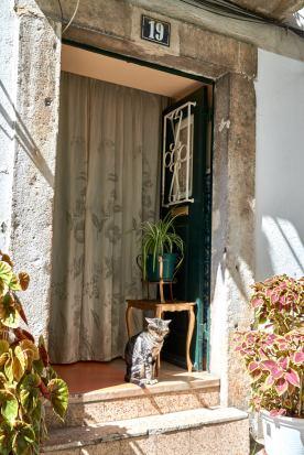 Katze im Hauseingang Alfama Lissabon