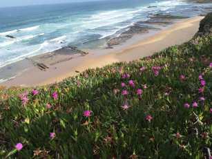Blumen Küste Meer Portugiesischer Jakobsweg