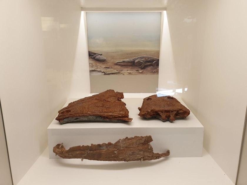 Fossilien im Stadtmuseum Loulé