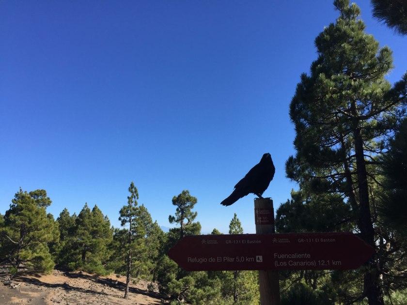 Wegweiser Vogel La Palma Wanderung