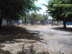 Sementeira_Olinda (3)