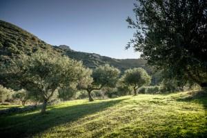 © Le terres Oli.Tina à Kythira (Cyhtère, Grèce)