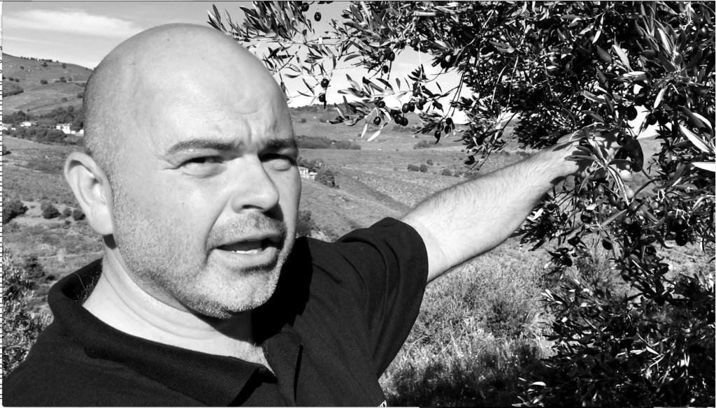 Olivier Borrat LES OLIVERAIES DE LA BAILLAURY, variété d'olives Courbeil