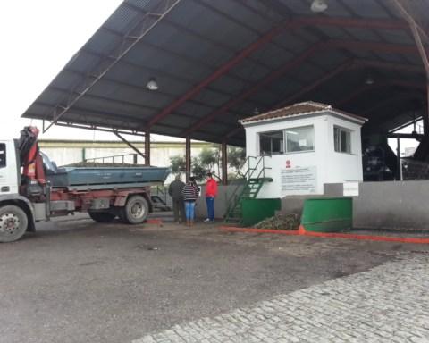 patio_aceitunas_olipe_aceite_ecologico_campaña_1415