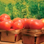 Agricultura Bio Aceite Ecologico Olivar de Sierra Los Pedroches Olivalle
