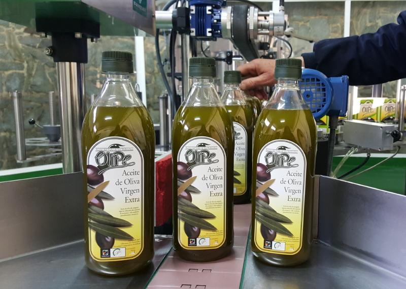 olipe en rama aceite verde aceite ecologico olivar de sierra los pedroches olivalle olivarera