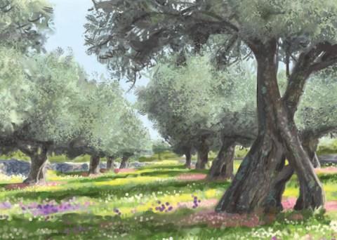 Flora del Olivar Olivar de Sierra Aceite Ecologico Olivarera Olipe Olivalle