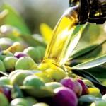 aceite de oliva ecologico_olipe_olivarera_los_pedroches_pozoblanco_olivar_sierra