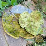 Speckled Fig Leaf Dishes