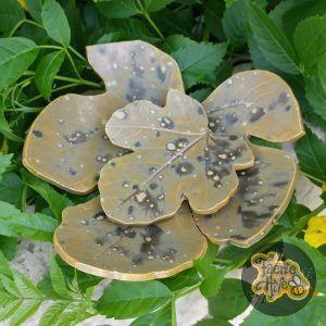 Moss Fig Leaves Dish Set