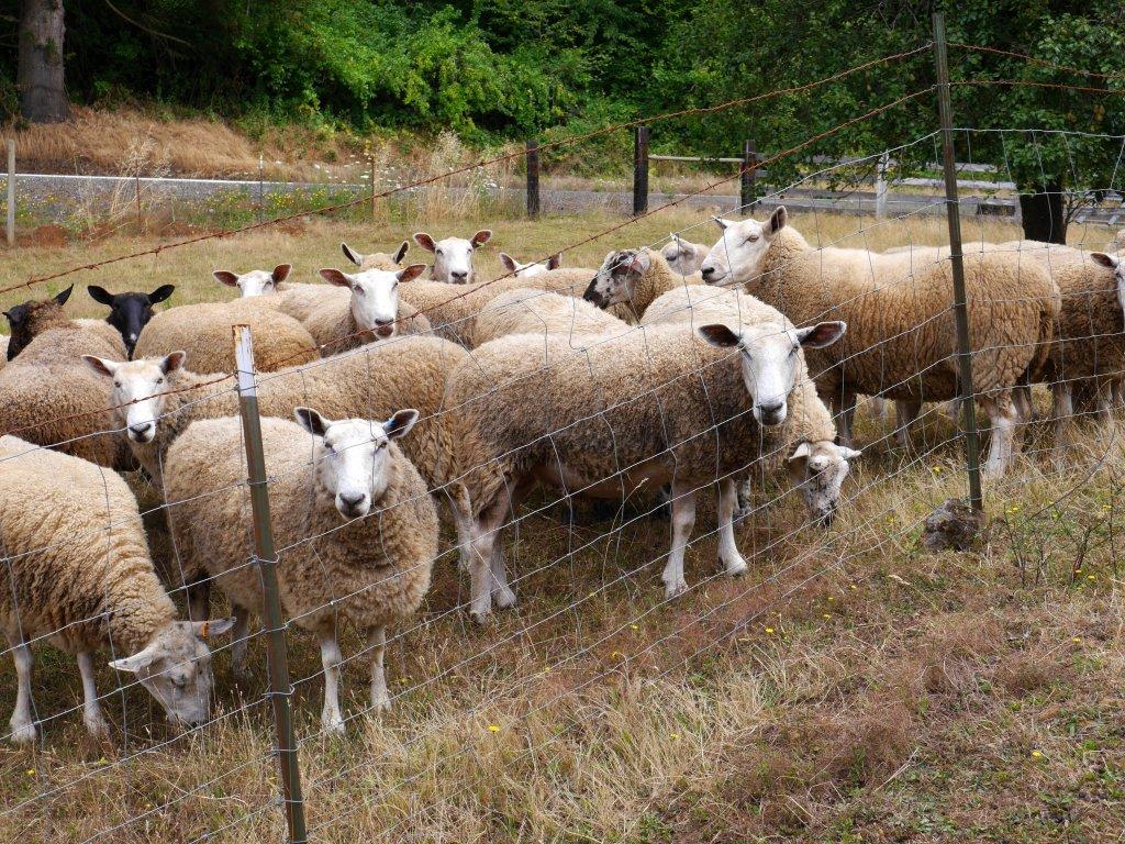 a-charming-flock