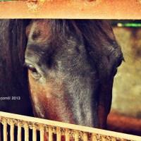 My Horse Riding! Pengalaman Equestrian Berkuda di Jakarta
