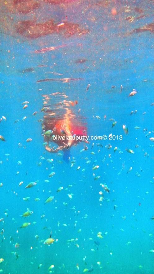 Snorkeling di Amed Bali