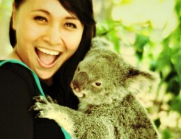 main sama koala dan kangguru