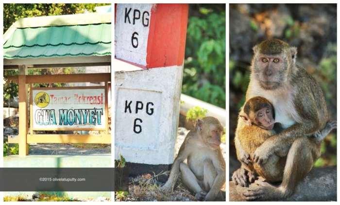 ngapain di Kupang