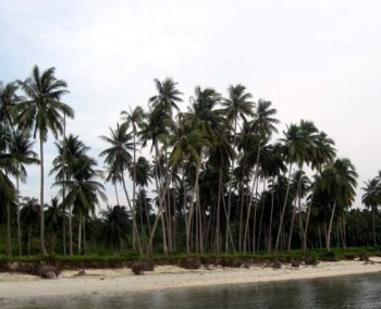 Palm Trees Along The River