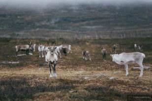 norvege suede voyage photographie roadtrip 2016 10 08417