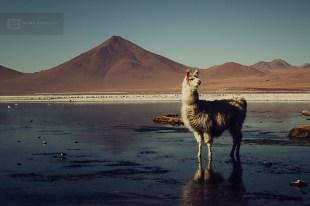 photo-voyage-bolivie-sud-lipez-salar-uyuni-2012-08-123-900px