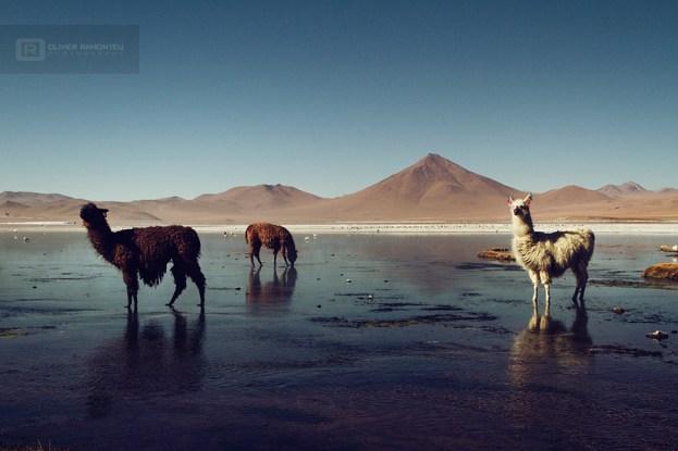 photo-voyage-bolivie-sud-lipez-salar-uyuni-2012-08-124-900px