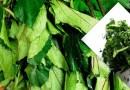The Miracle Of Ugu (Pumpkin) Leaves (pic)