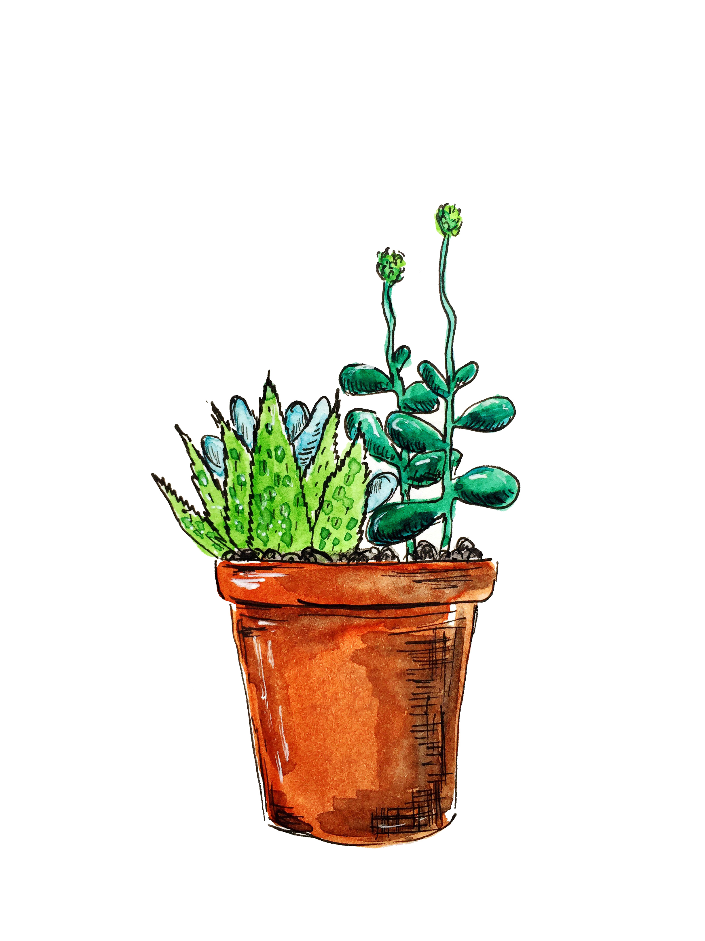 Another Succulent Printable Olya Schmidt