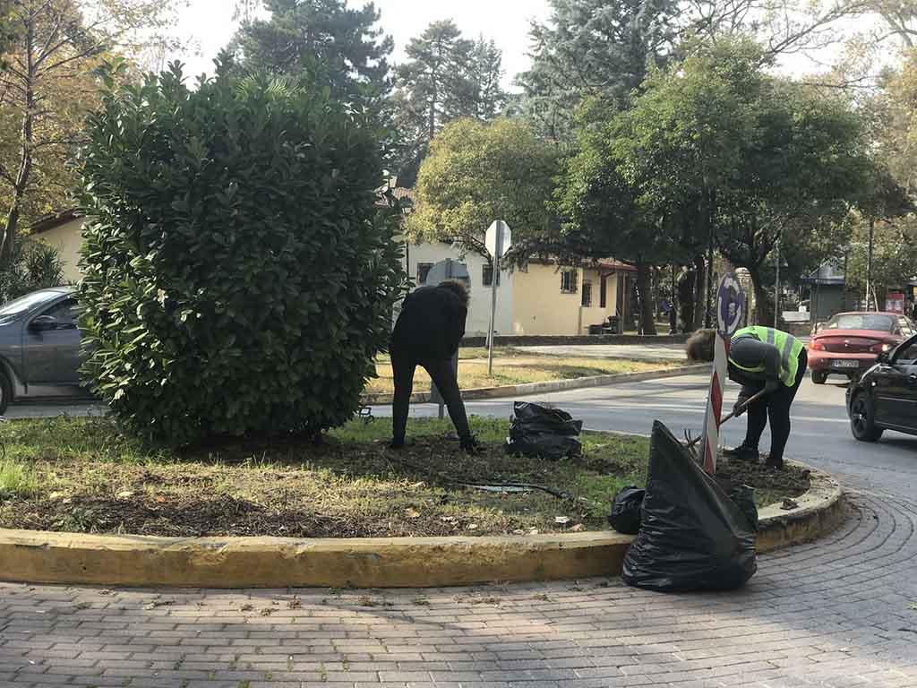 Δήμος Κατερίνης | Φύτευση ανθοφόρων λουλουδιών σε πλατείες & κοινόχρηστους χώρους