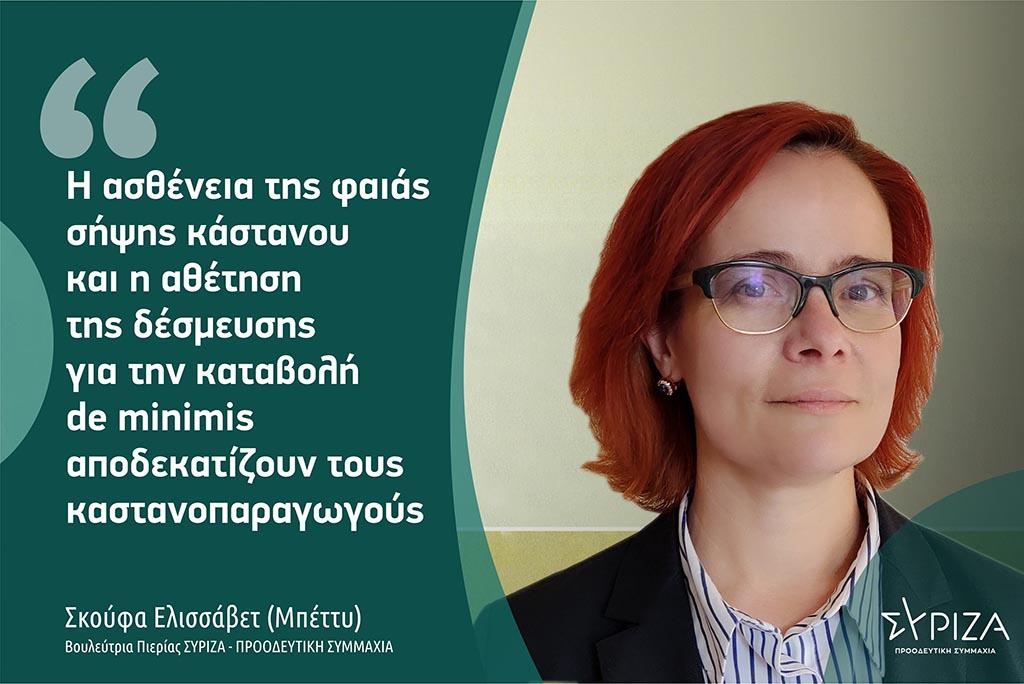 Σκούφα: «Η ασθένεια της φαιάς σήψης κάστανου και η αθέτηση της δέσμευσης για την καταβολή de minimis αποδεκατίζουν τους καστανοπαραγωγούς»
