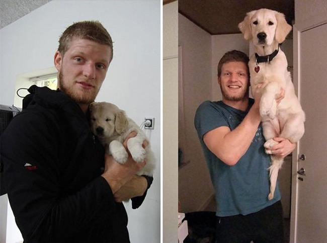 dogs-o-macho-alpha-7
