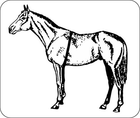 Horse Tack Coloring Pages Coloring Pages