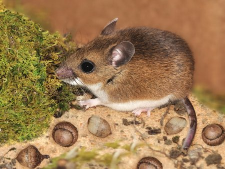 Animal Health - Hantavirus