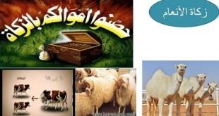 ملخص شرح درس زكاة الأنعام تربية اسلامية للصف السابع الفصل الثاني