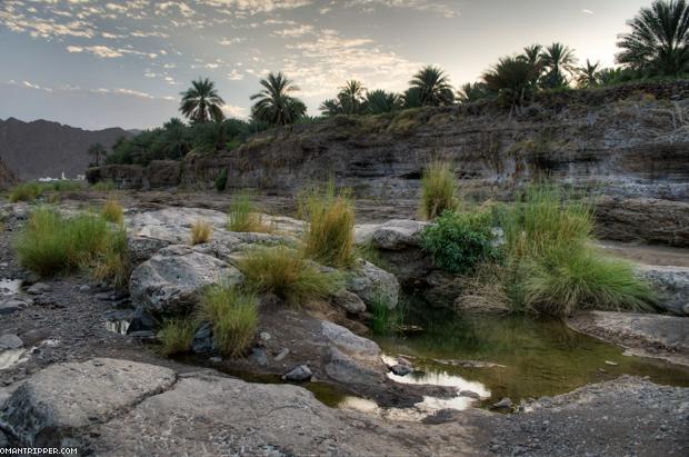 Wadi Dima (6)