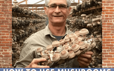 How to Use Mushrooms for Weight Loss with Jeff Chilton!