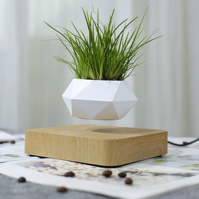 Pot de fleur en lévitation bois clair décoration d'intérieur bureau présentation petite plante