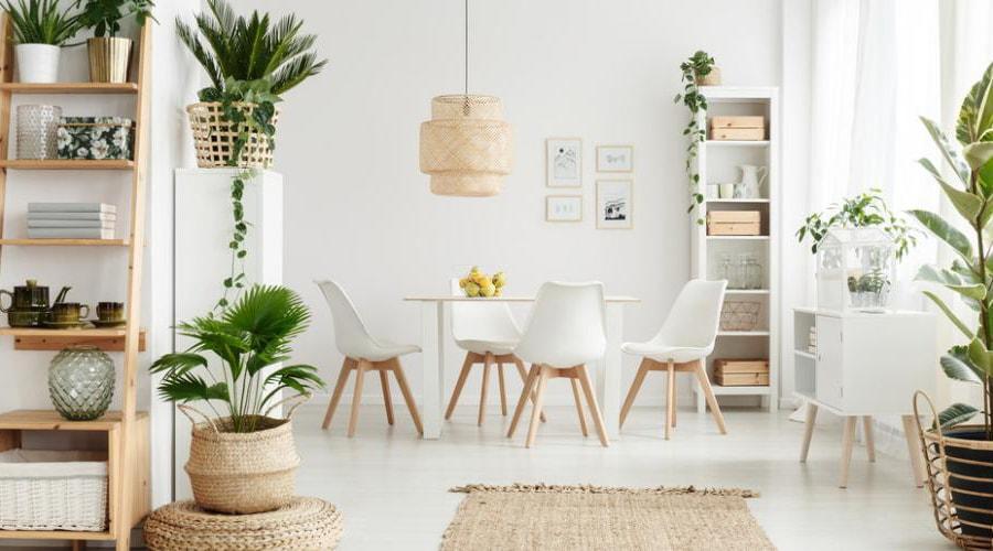 plante appartement et décoration