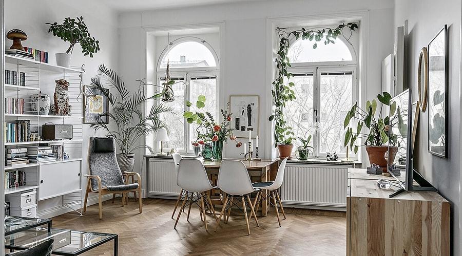 plante appartement conseils décoration
