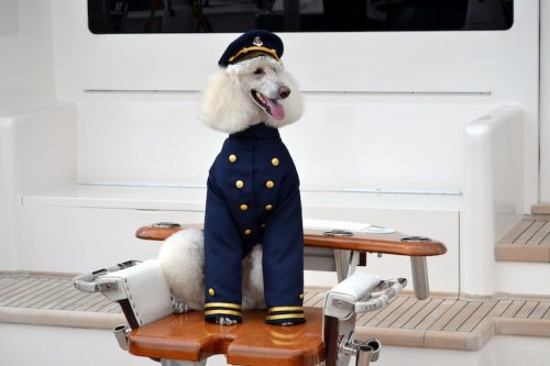 Admiral Jacket and Cap Dog Costume