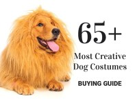 65+ Most Creative Dog Costumes