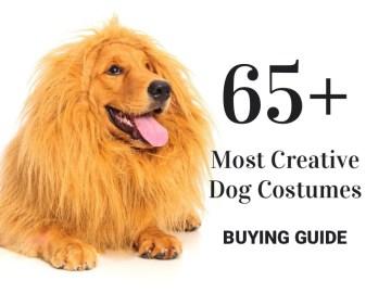65+ Most Creative Dog Costumes