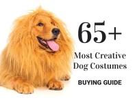 65+ Most Creative Dog Costumes - OMG I Need