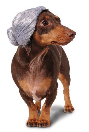 Old Lady Dog Wig