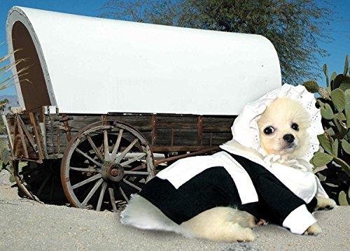 Pilgrim Dog Costume