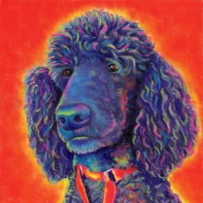 Poodle Digital Custom Painting