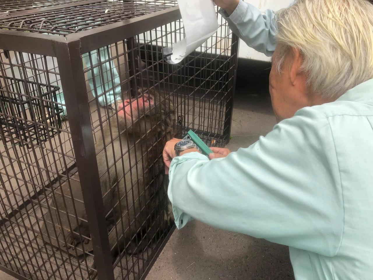 京都「野豬騎士」獼猴不見10天 終於尋回後「表情像在反省」超無辜 - 爆新聞