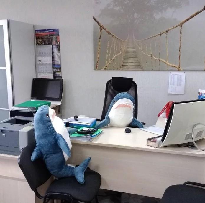 全網瘋玩「IKEA鯊魚玩偶」 吃飯、讀書、看邪惡影片…各種爆笑 - 爆新聞