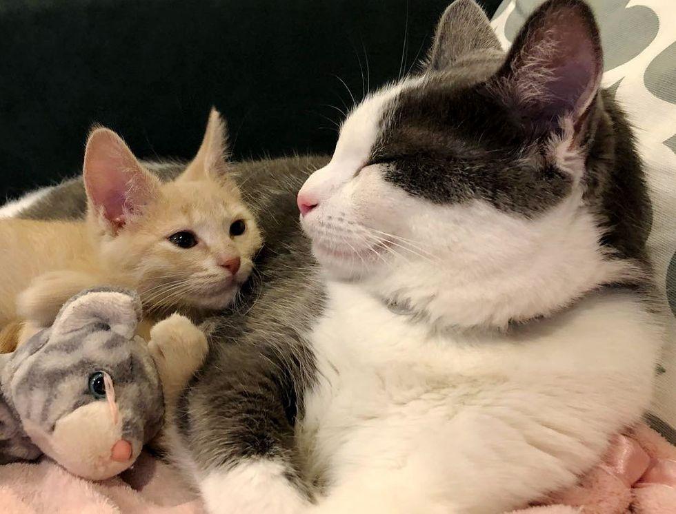 小奶貓剛被收編就「找前輩拜碼頭」 貓姐撐數天融化:還不是看你可愛~ - 爆新聞