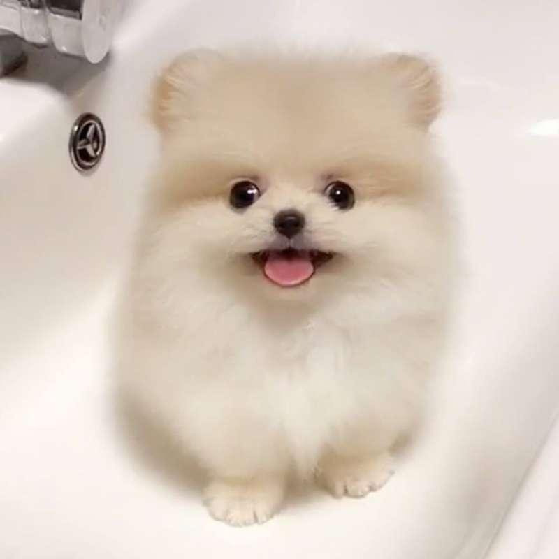 小狗狗對著鏡頭「盯著你看」 秒療癒大家的心:好想抱回家啊 - COCO01
