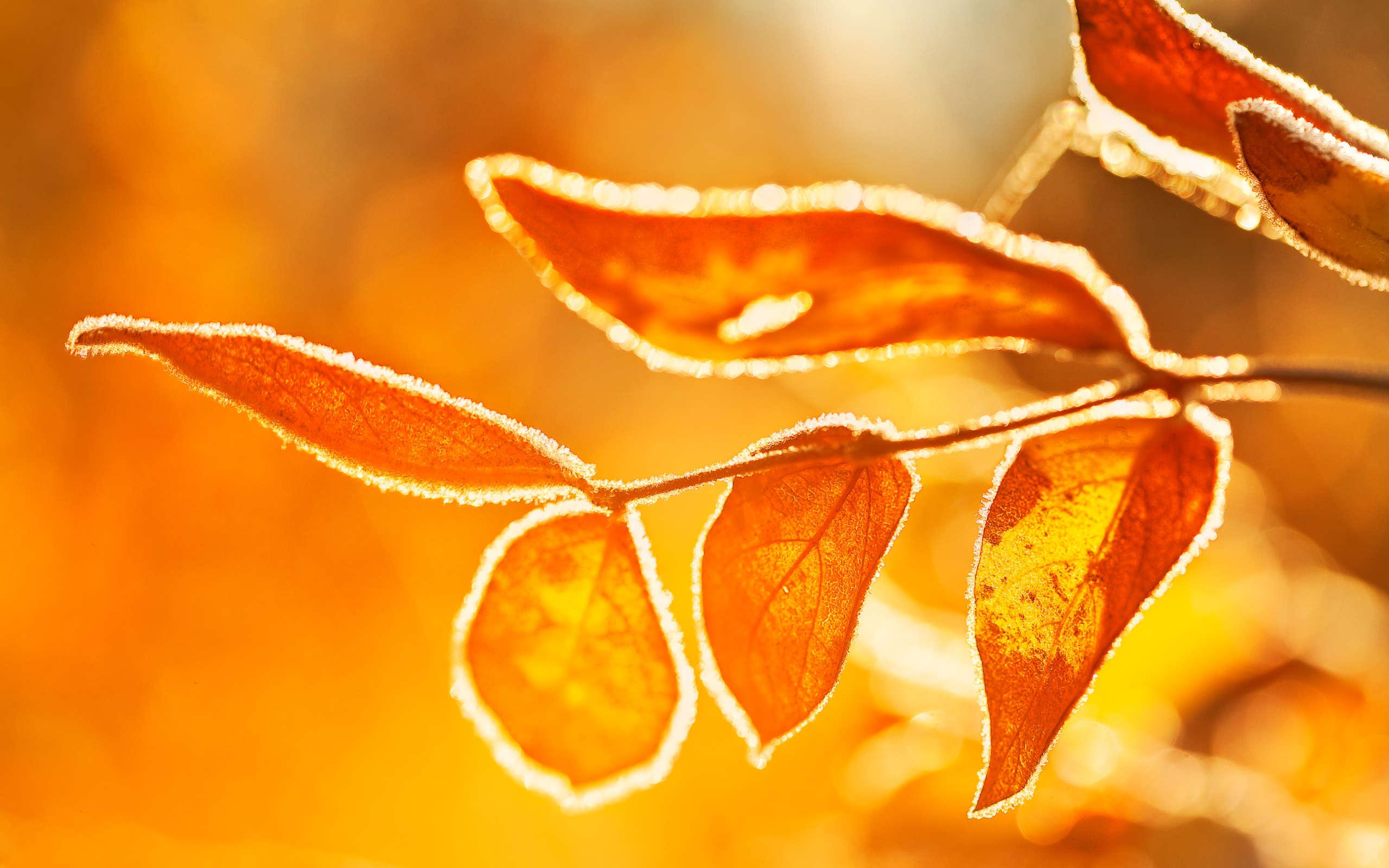 Fall Leaves Desktop Wallpaper Ubuntu 13 04 Winning Wallpapers Revealed Omg Ubuntu